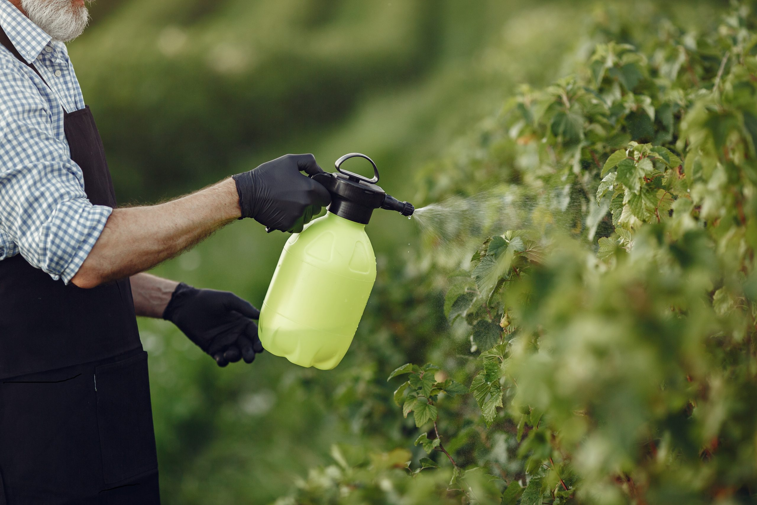 Grape Pest Control – Get Those Buggers!