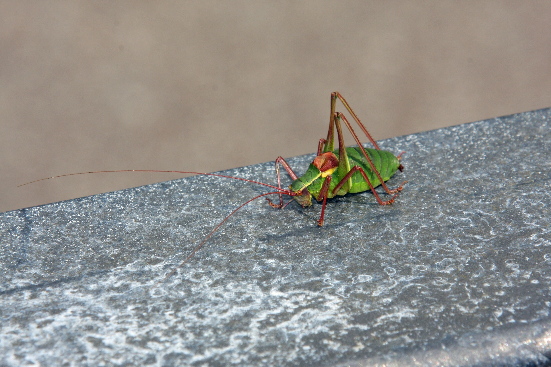 Pest Control Marketing on the Internet